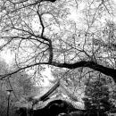 Temple Gate Of Setagaya Kannon