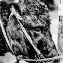 Donkey With A Bridle