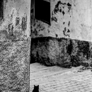 Black Cat At The Corner Of The Lane
