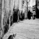背後を突かれた猫