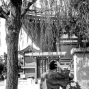 Young Couple Under The Willow @ Tokyo