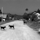 Dogs Playing On The Dirt Road