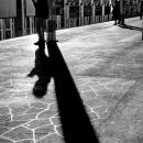Shadows On Platform