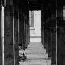 柱に囲まれて座る青年