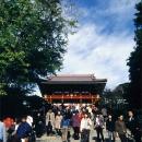 Tsurugaoka Hachimangu Shrine @ Kanagawa
