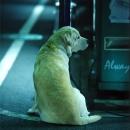 Dog At Night @ Tokyo
