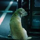 Dog At Night