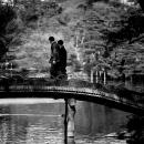 Bridge In Rikugien Garden