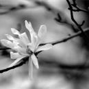 Magnolia @ Tokyo