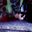 猫が覗いていた @ 東京