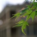 Leaves In Iwasaki House @ Tokyo