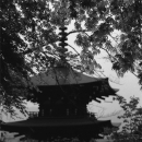 Three-storied Pagoda In Okadera @ Nara