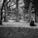Reading Books In The Forest @ Tokyo