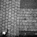Pigeon Was Walking @ Tokyo