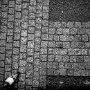 Pigeon Was Walking