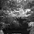 Nio-mon Gate In Joshin-ji @ Tokyo