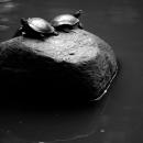 有栖川宮記念公園の亀たち