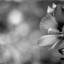 Flower @ Tokyo