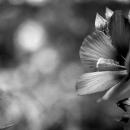 Flower In Mukojima-Hyakkaen