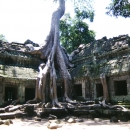 Temple Beneath A Root @ Cambodia