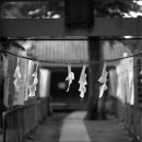 Paper At An Entrance Of A Shrine @ Saitama