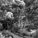 Bridge In A Park @ Tokyo