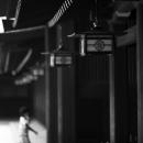 明治神宮の提灯