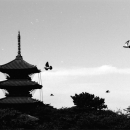 Five-storied Pagoda And Birds @ Tokyo