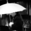 Lady With An Umbrella In The Street @ Kanagawa