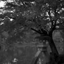 Stone Lantern In Kenroku-en Garden @ Ishikawa