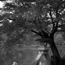 Stone Lantern In Kenrokuen Garden