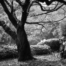 新宿御苑の写真家たち