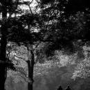 公園の中を歩く人影