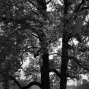 Around The Tree @ Tokyo