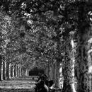 新宿御苑の並木にあるベンチ