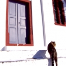 A Cat Walking In Front Of A Door @ Greece