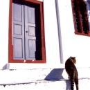 Cat Walking In Front Of A Door