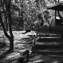 三渓園の小径