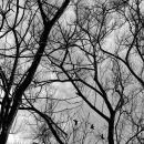 Birds Beyond The Trees