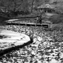 Iris Garden In Meiji Jingu