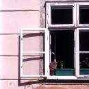 Little Cat By The Window
