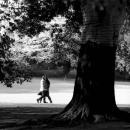 木の向こう側を歩くカップル
