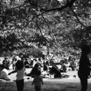 People Enjoying Picnic
