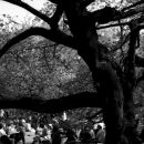 Picnic Under The Tree