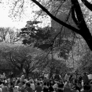 Picnic Under The Cherry Blossoms In Shinjuku Gyoen Park @ Tokyo