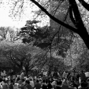 Picnic Under The Cherry Blossoms In Shinjuku Gyoen Park