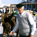 Man With A Gorgeous Mustache And Donkey