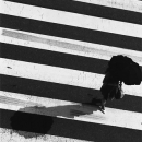 Zebra And Umbrella @ Tokyo