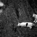 Two Cats At The Base Of A Tree