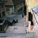 Cat In Sibiu